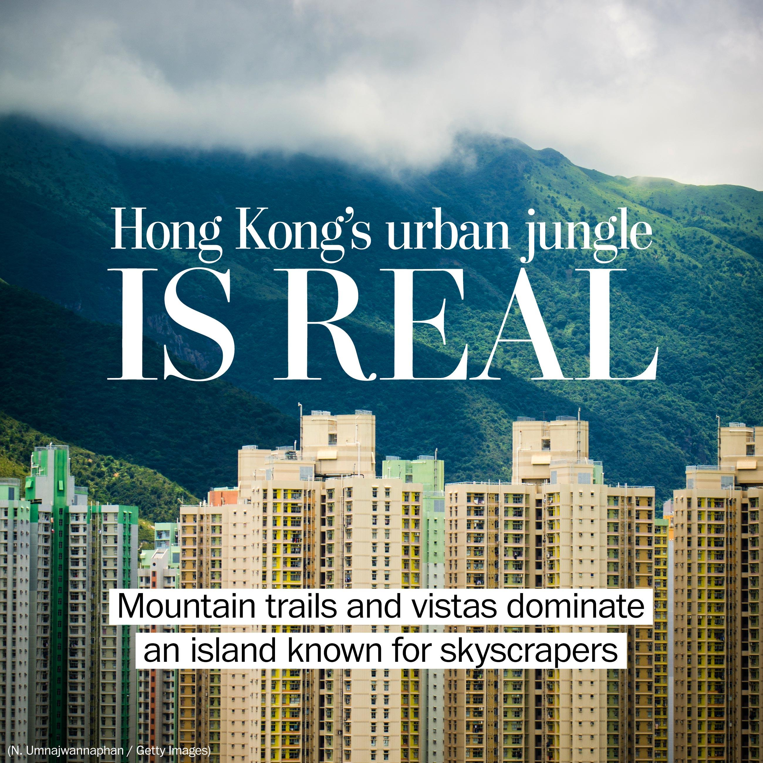 Hong Kong's urban jungle is real, not a metaphor for concrete and steel
