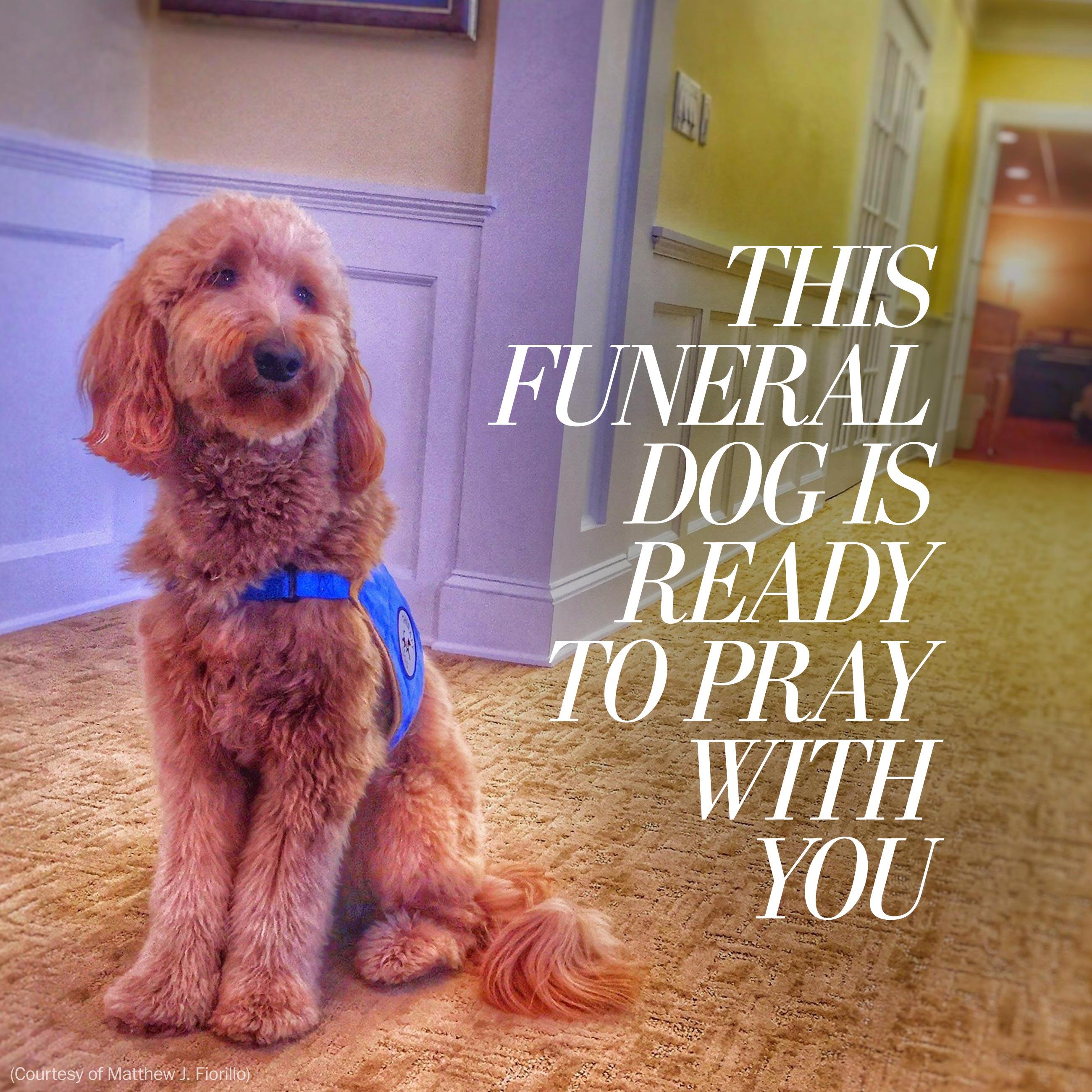 There's a dog at this funeral home, ready to pray with you